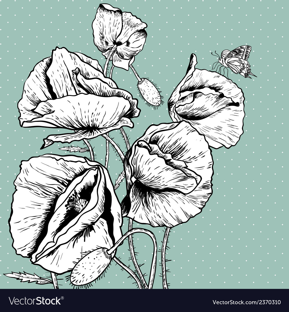 Monochrome background with bunch poppy vector | Price: 1 Credit (USD $1)