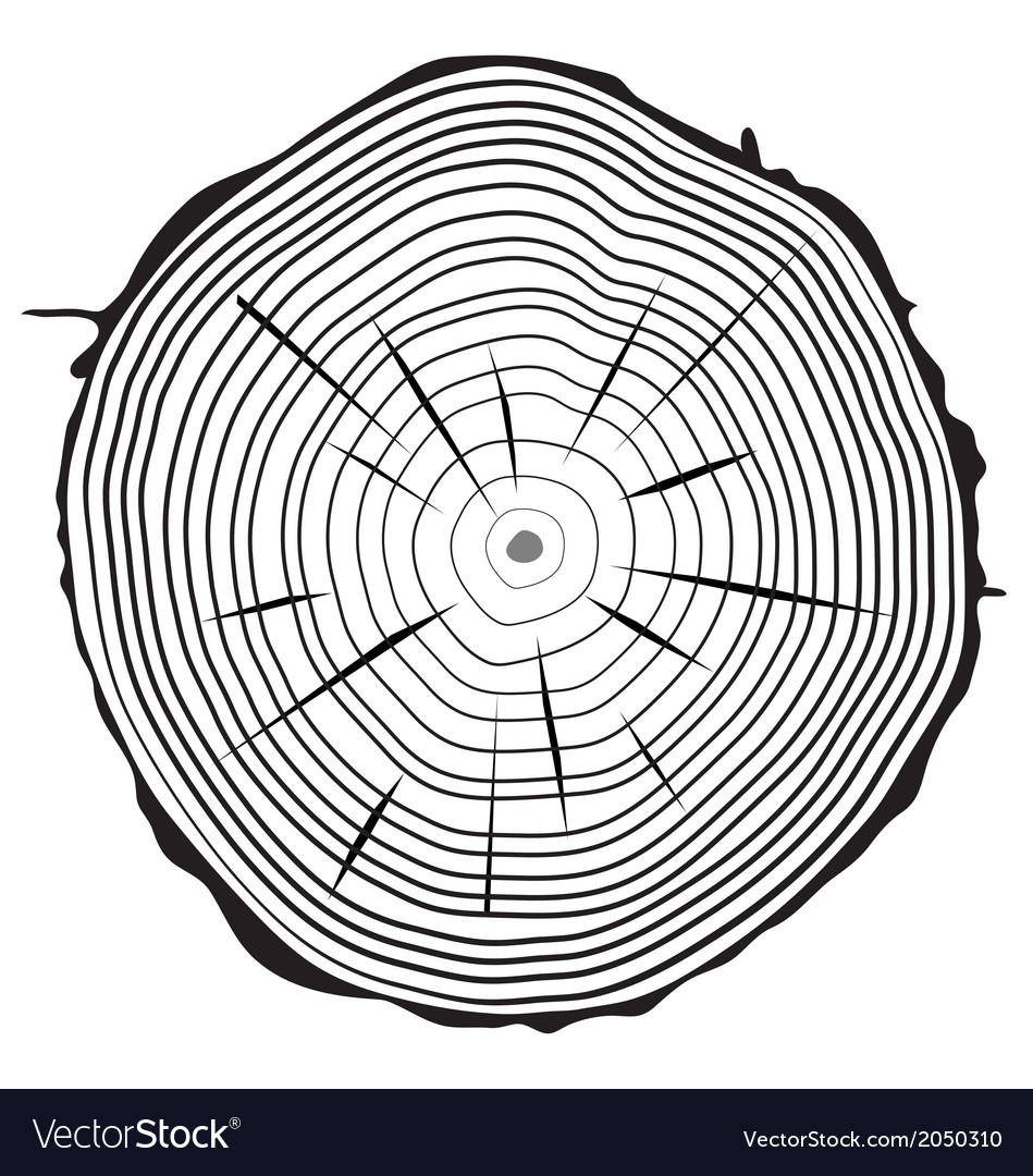 Rings of trunk vector | Price: 1 Credit (USD $1)