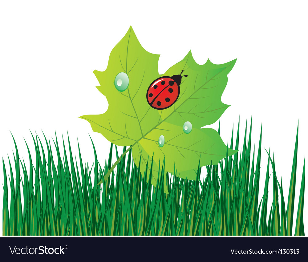 Ladybird on a green leaf vector | Price: 1 Credit (USD $1)