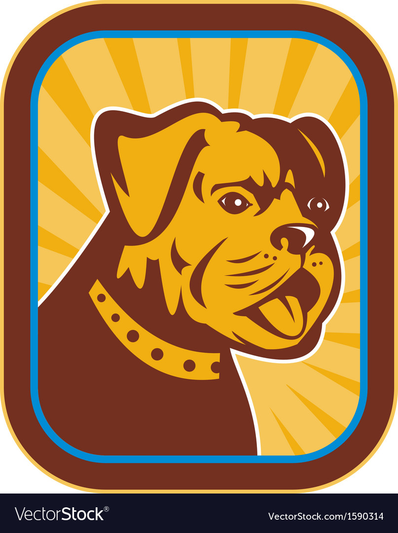 Bulldog and boston terrier hybrid vector | Price: 1 Credit (USD $1)