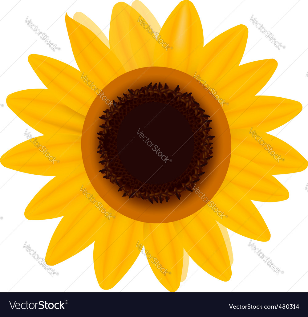One sunflower vector | Price: 1 Credit (USD $1)