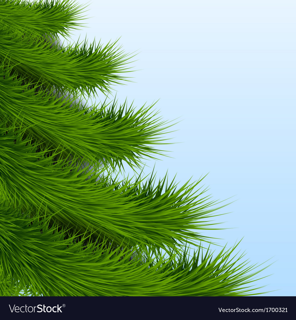 Background christmas tree spruce vector | Price: 1 Credit (USD $1)
