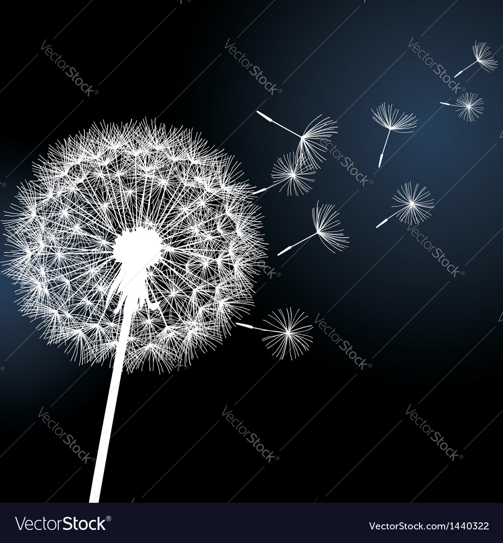 Flower dandelion on black background vector | Price: 1 Credit (USD $1)