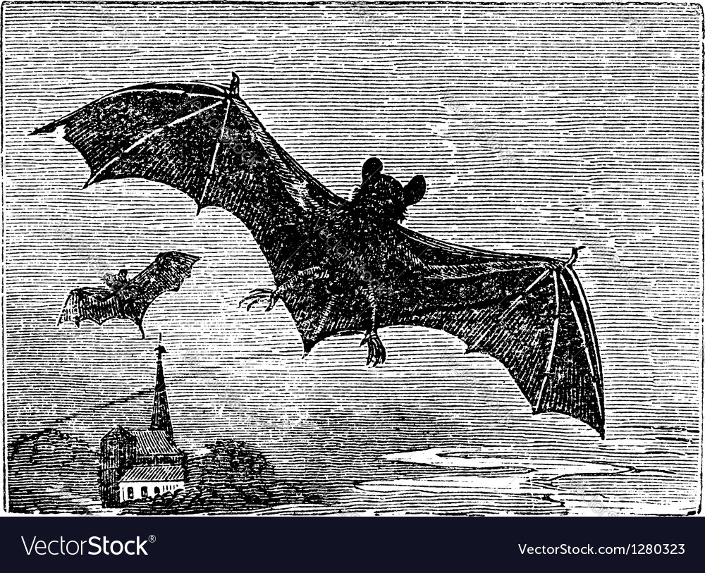 Common bat vintage engraving vector | Price: 1 Credit (USD $1)