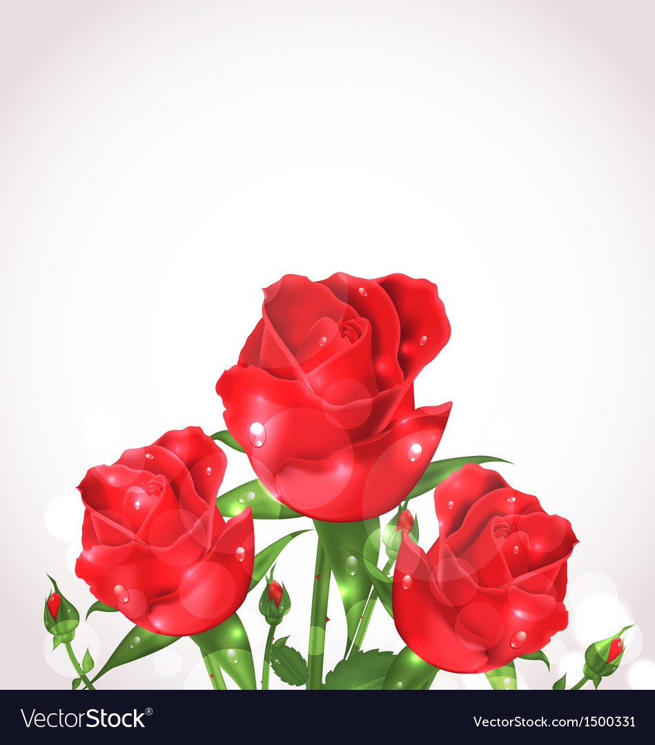 Three roses for design wedding card vector | Price: 1 Credit (USD $1)