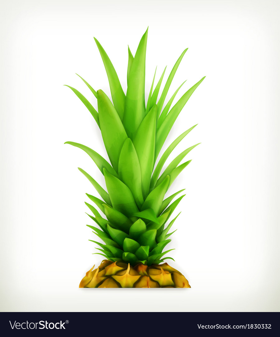 Pineapple top vector | Price: 1 Credit (USD $1)