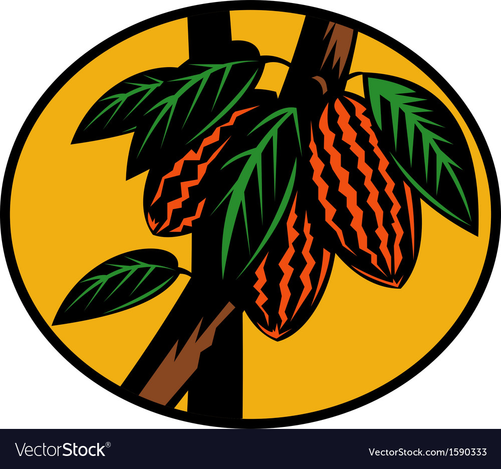 Cacao or cocoa fruit on tree vector | Price: 1 Credit (USD $1)