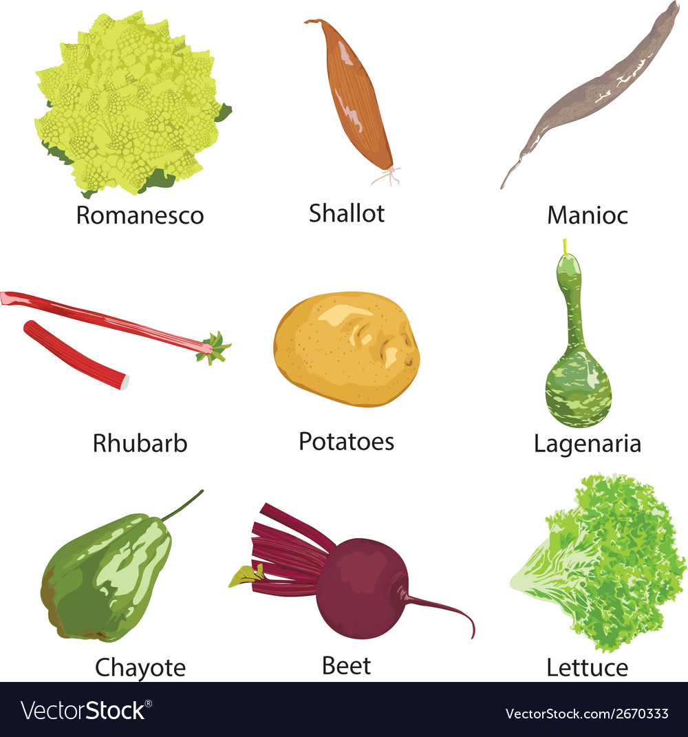 Different vegetables on a white background vector | Price: 1 Credit (USD $1)