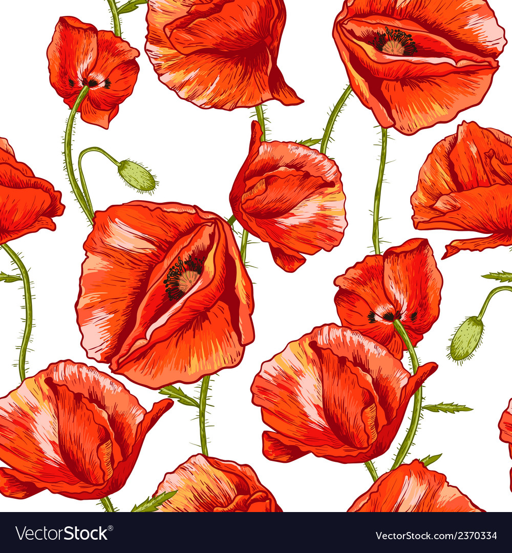 Seamless floral background with red poppy vector | Price: 1 Credit (USD $1)