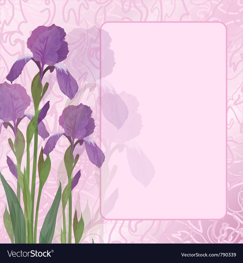 Flowers iris on pink background vector | Price: 1 Credit (USD $1)