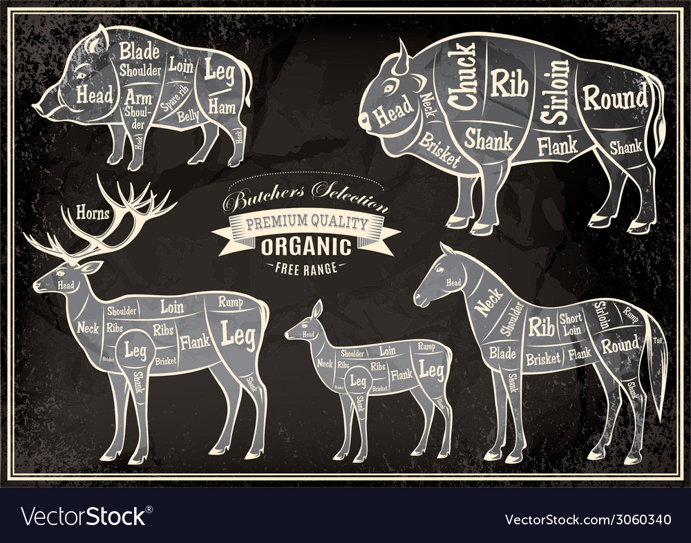 Diagram cut carcasses of boar bison deer horse vector | Price: 1 Credit (USD $1)