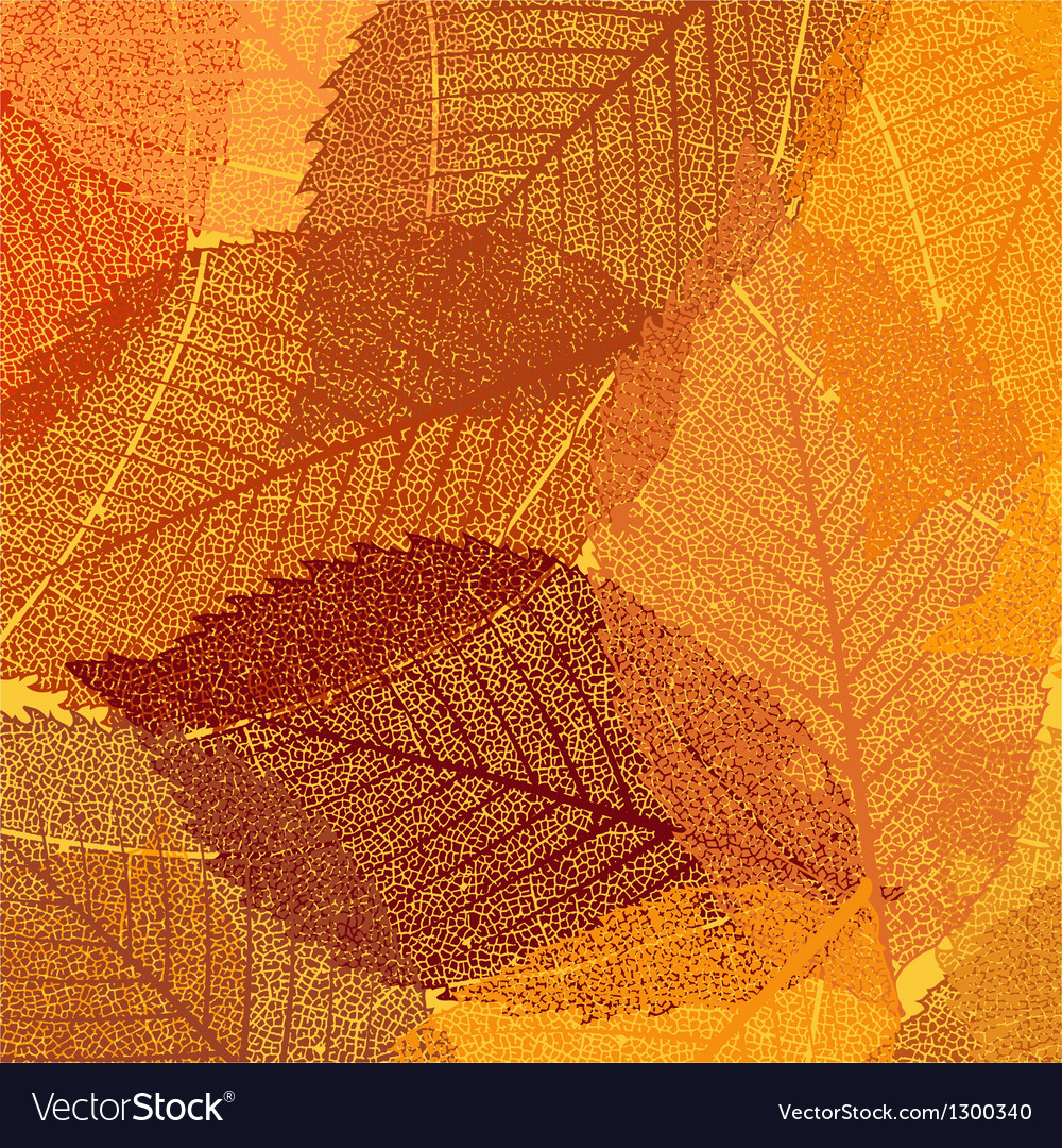 Dry autumn leaves template eps 8 vector | Price: 1 Credit (USD $1)
