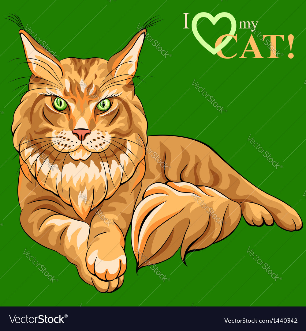 Maine coon cat vector | Price: 3 Credit (USD $3)