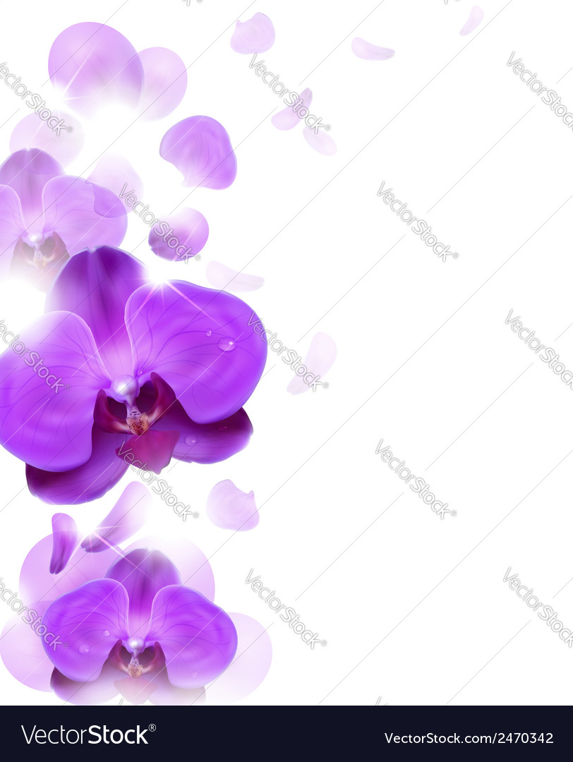 Purple orchid vector | Price: 1 Credit (USD $1)