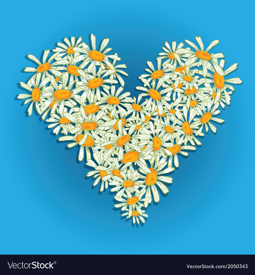 Heart flowers camomile vector | Price: 1 Credit (USD $1)