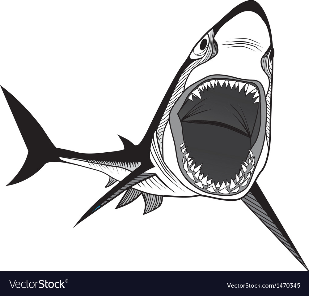 Shark fish head symbol for mascot vector | Price: 1 Credit (USD $1)