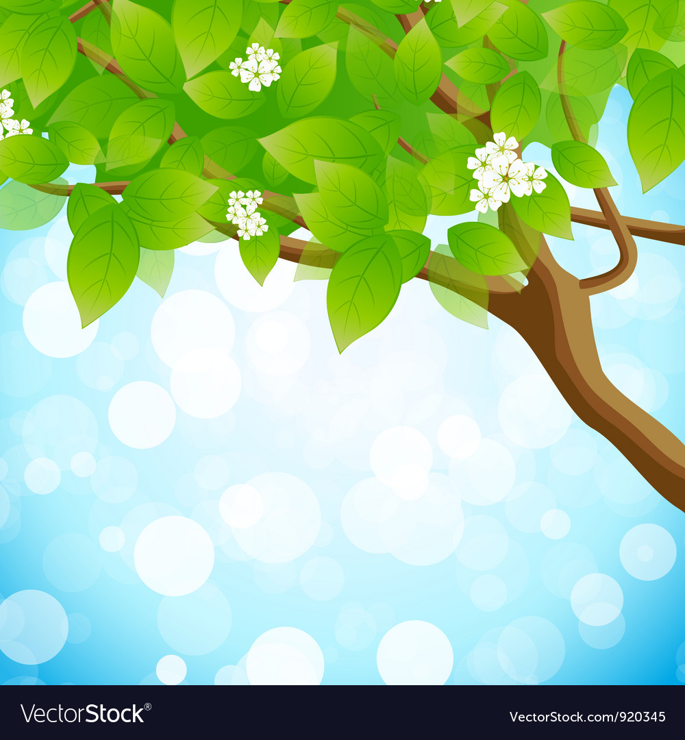 Tree branch vector | Price: 3 Credit (USD $3)