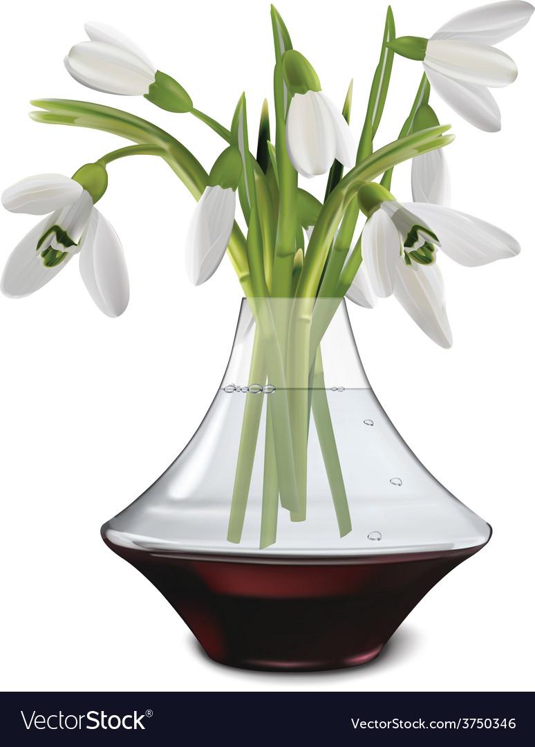 Snowdrops in a vase vector   Price: 1 Credit (USD $1)