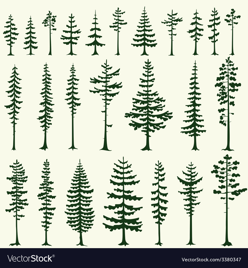 Set of stylized pine silhouettes vector | Price: 1 Credit (USD $1)
