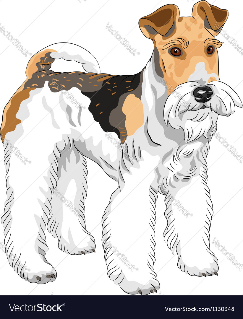 Dog wire fox terrier breed vector | Price: 1 Credit (USD $1)