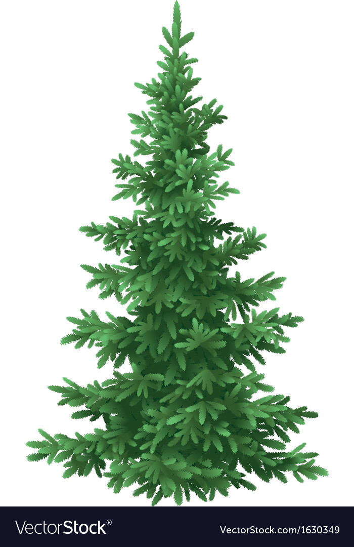 Christmas fir tree isolated vector | Price: 1 Credit (USD $1)