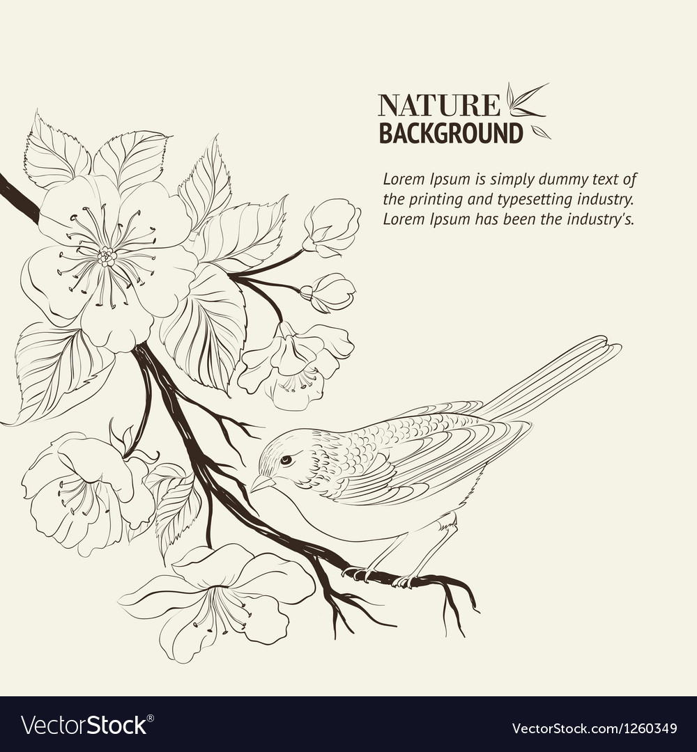 Hand drawn bird on sacura branch vector | Price: 1 Credit (USD $1)