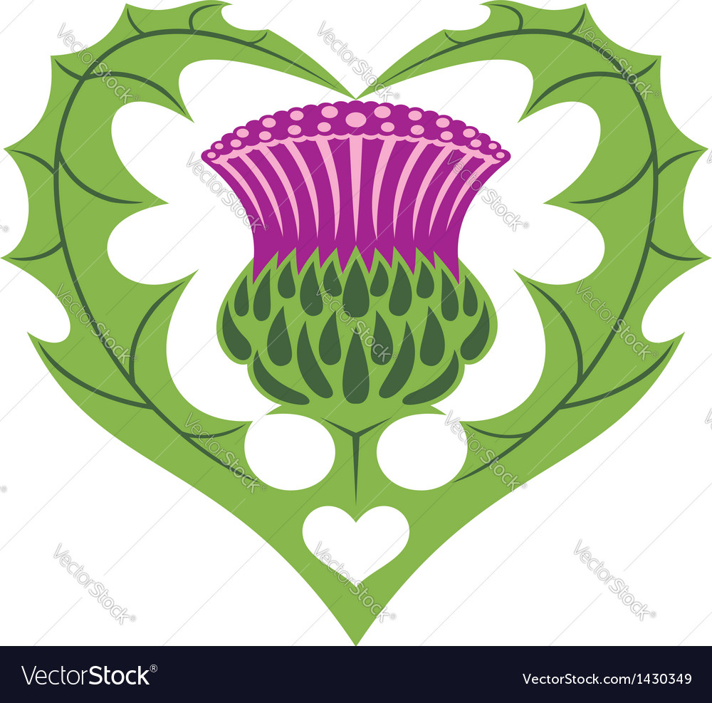 Scottish heart and thistle vector | Price: 1 Credit (USD $1)