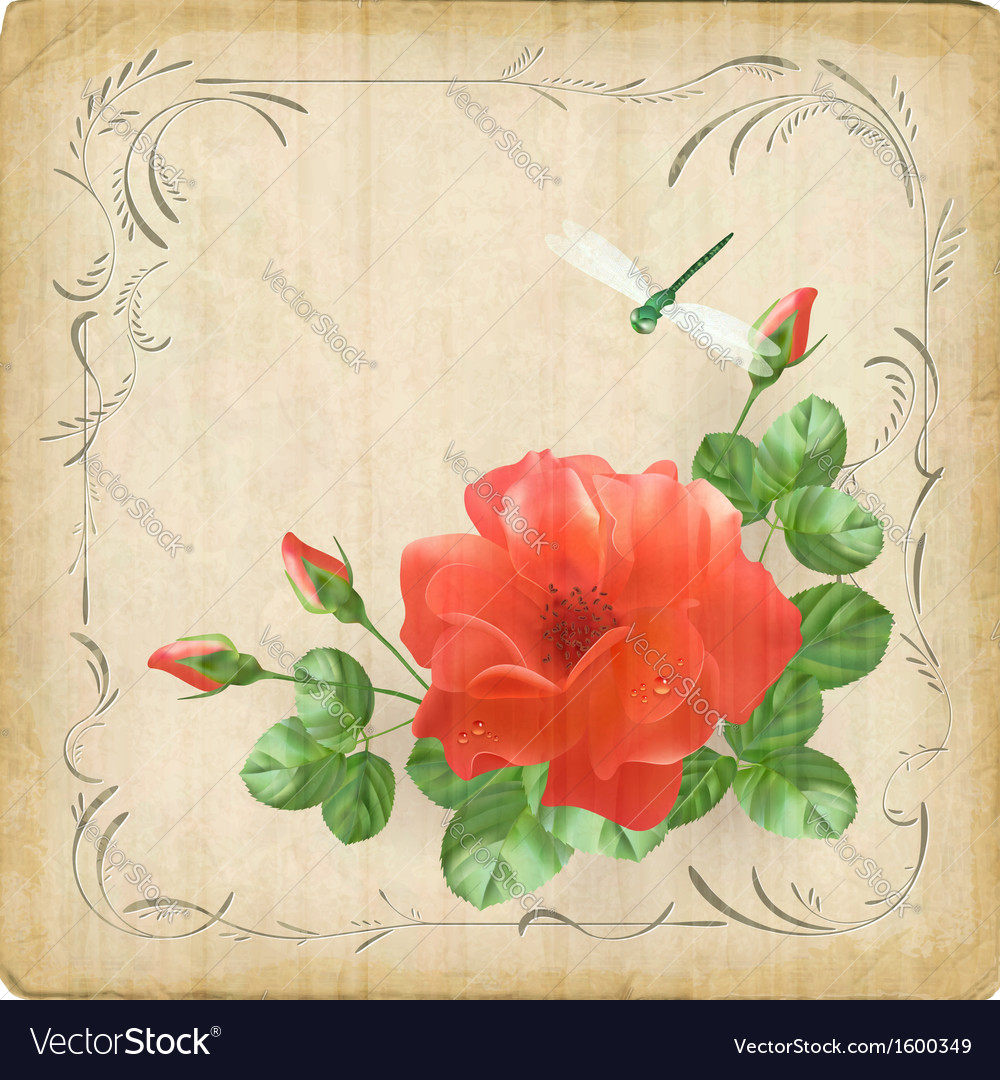 Vintage flower dragonfly retro card border frame vector | Price: 1 Credit (USD $1)