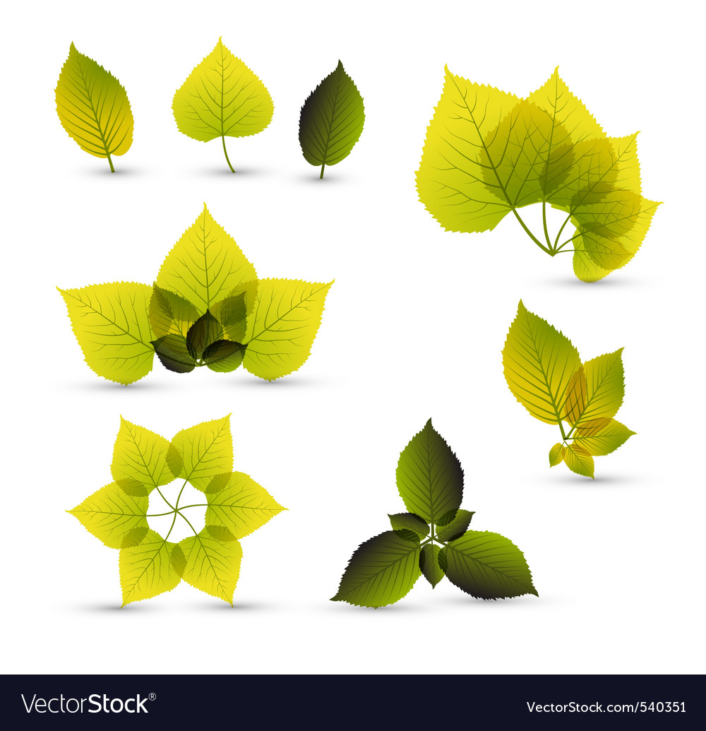 Leaf elements vector | Price: 1 Credit (USD $1)