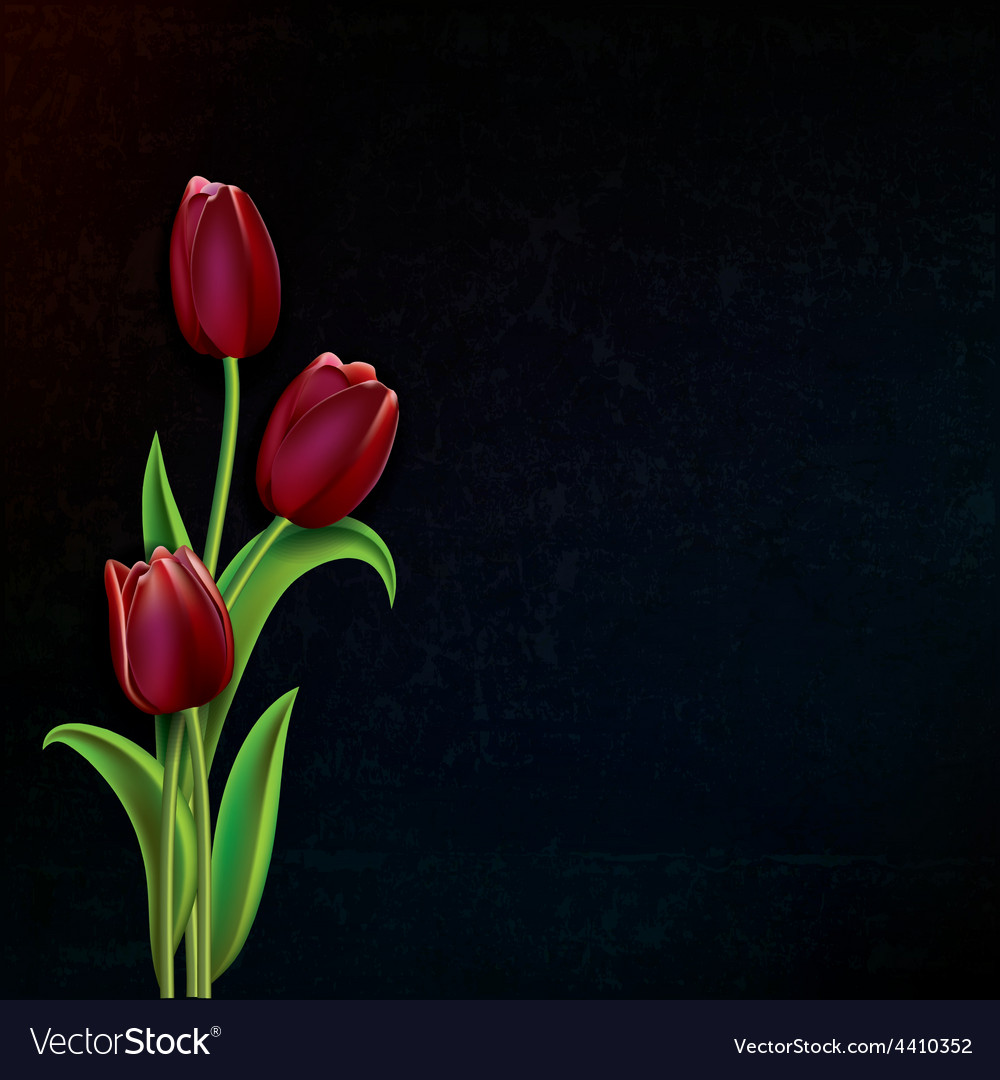 Abstract black grunge background with red tulips vector | Price: 1 Credit (USD $1)