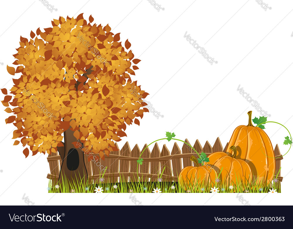 Autumn tree and pumpkins vector | Price: 1 Credit (USD $1)