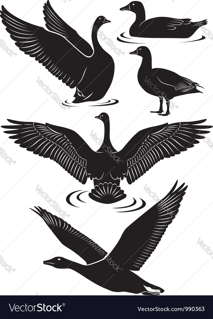 Geese vector | Price: 1 Credit (USD $1)
