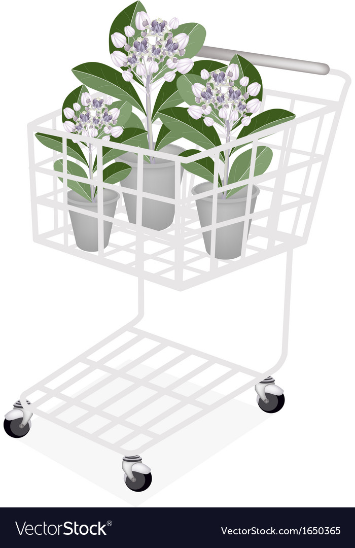 Fresh calotropis gigantea in a shopping cart vector | Price: 1 Credit (USD $1)