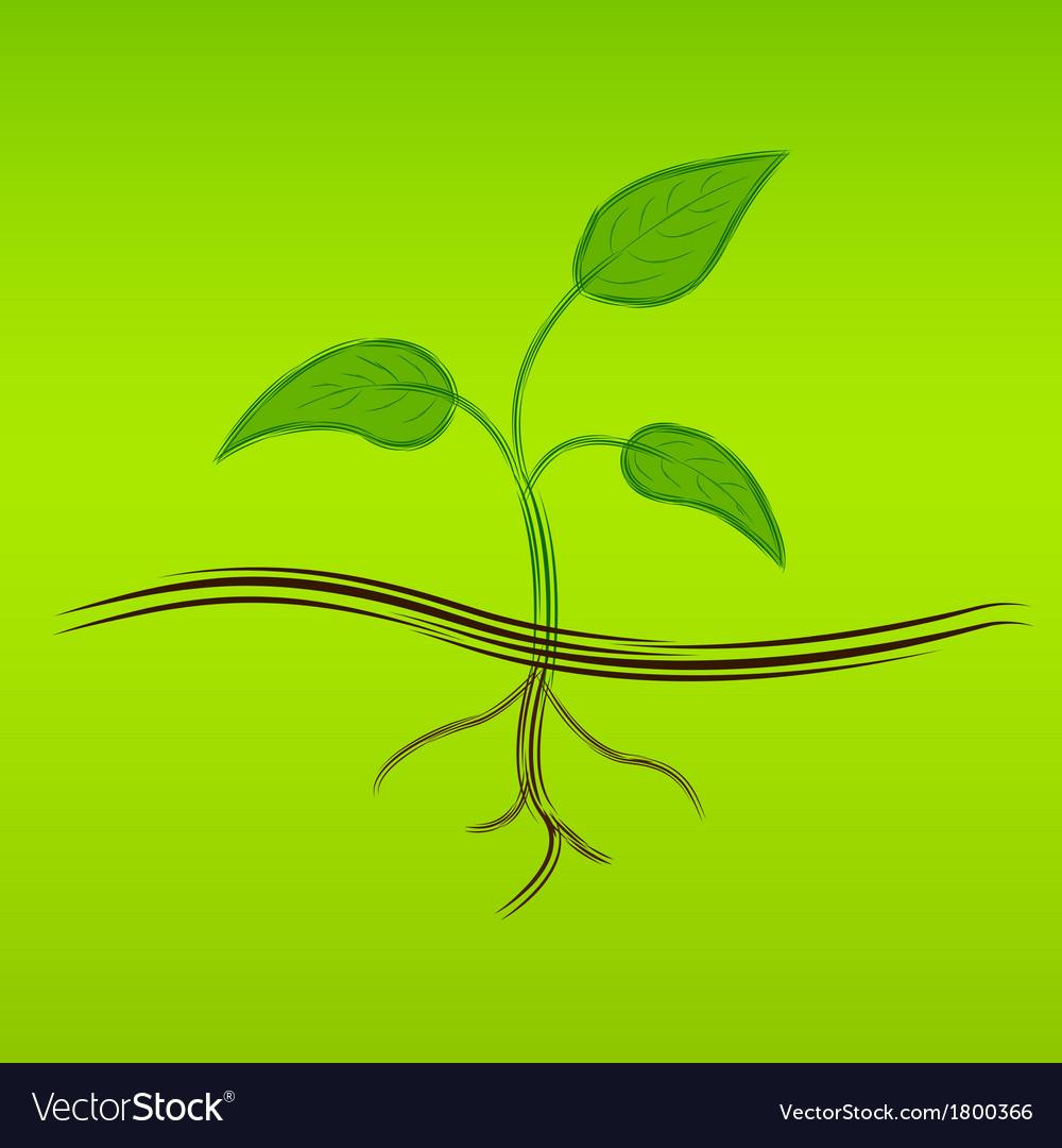 Sprout sketch vector | Price: 1 Credit (USD $1)