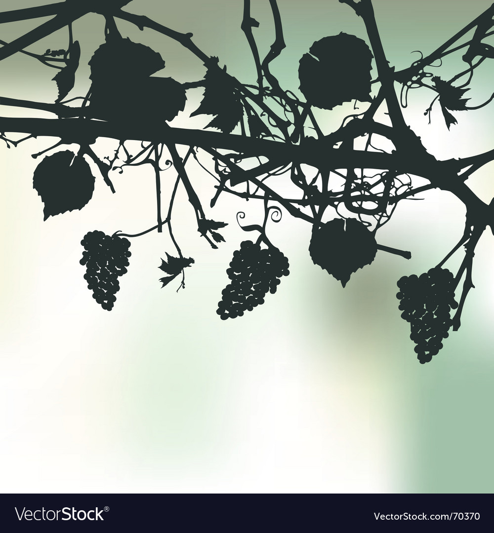 Bunch of grapes plant background vector | Price: 1 Credit (USD $1)