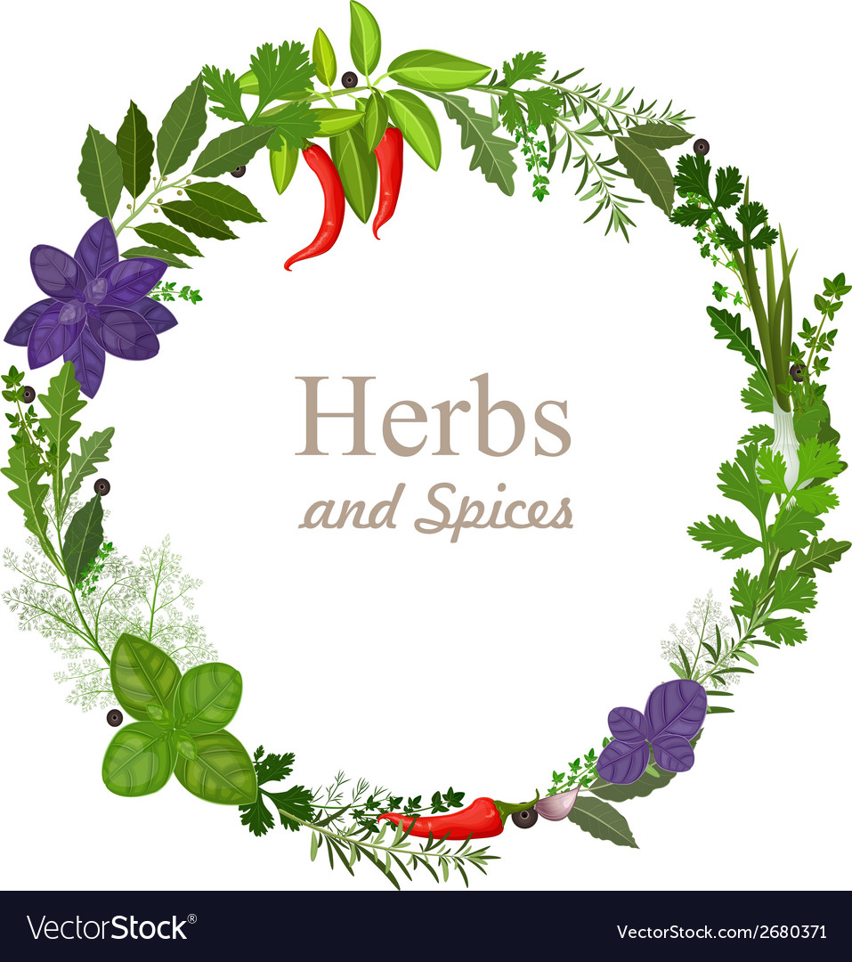 Wreath of herbs and spices on a white background vector | Price: 1 Credit (USD $1)
