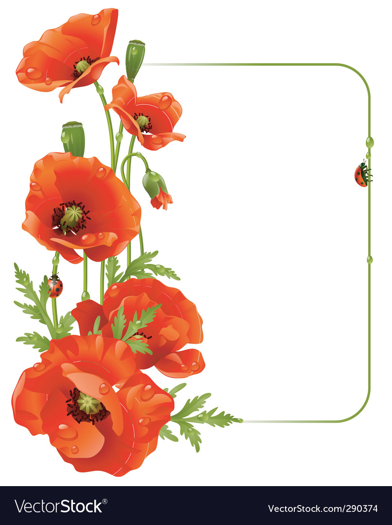 Red poppy frame vector | Price: 3 Credit (USD $3)