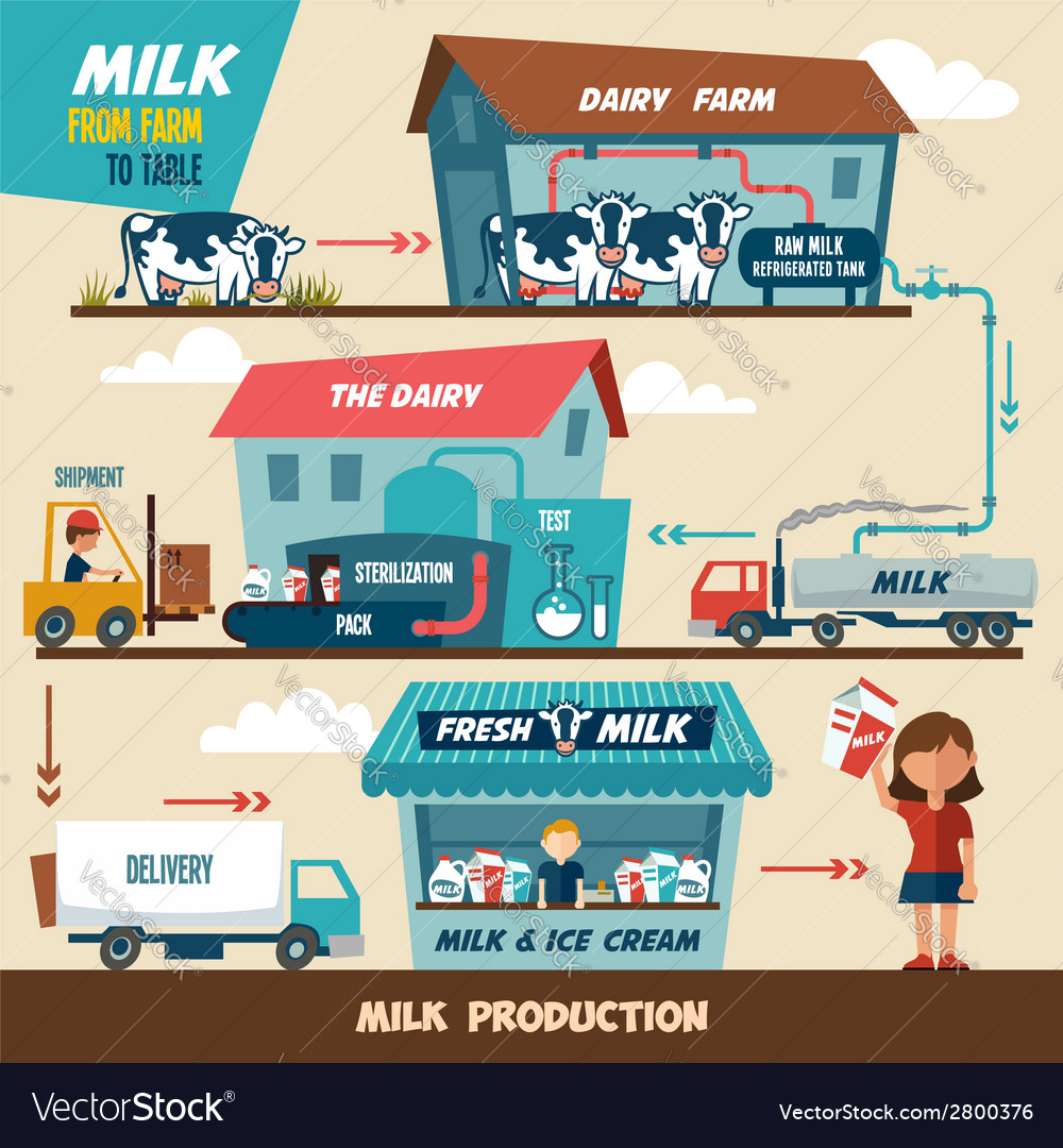 Milk production stages vector | Price: 1 Credit (USD $1)