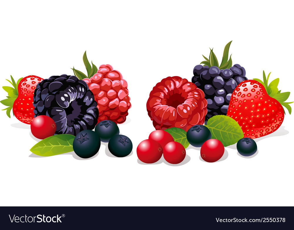 Berries isolated vector   Price: 1 Credit (USD $1)
