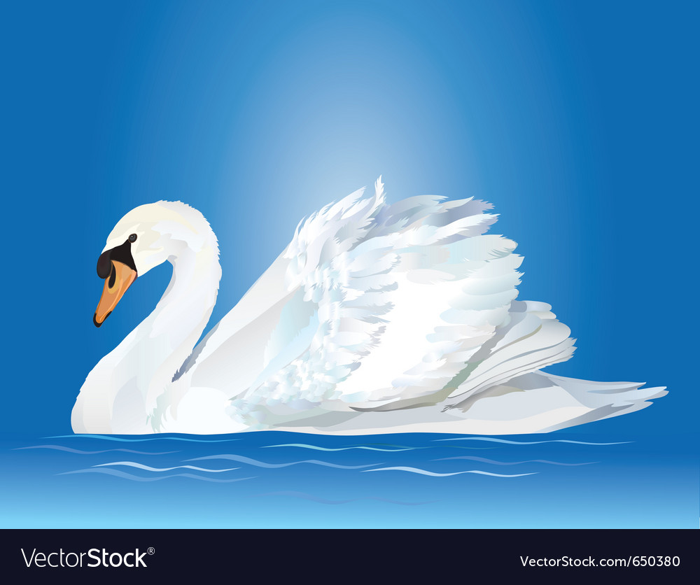 White swan vector | Price: 3 Credit (USD $3)