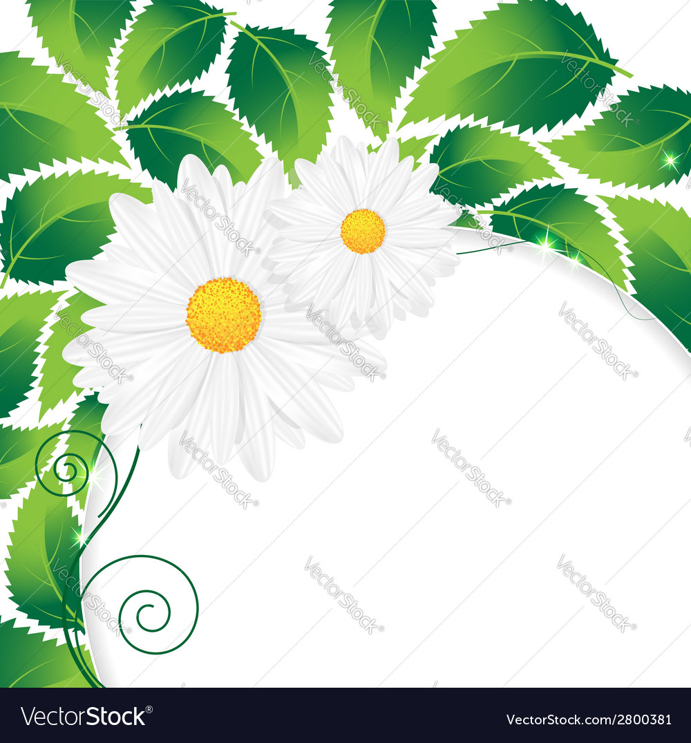 Chamomiles and leaves vector | Price: 1 Credit (USD $1)