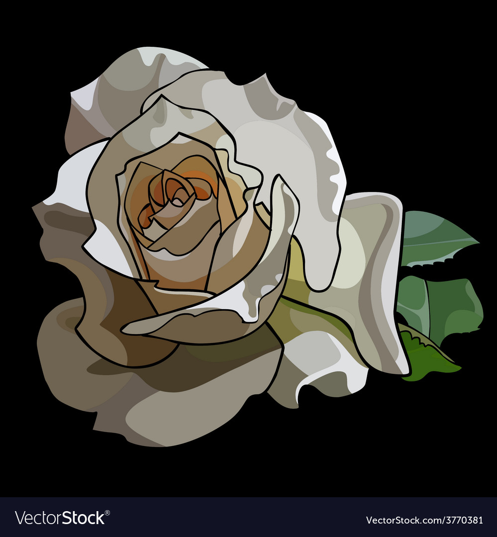 Large white rose on a black background vector | Price: 1 Credit (USD $1)