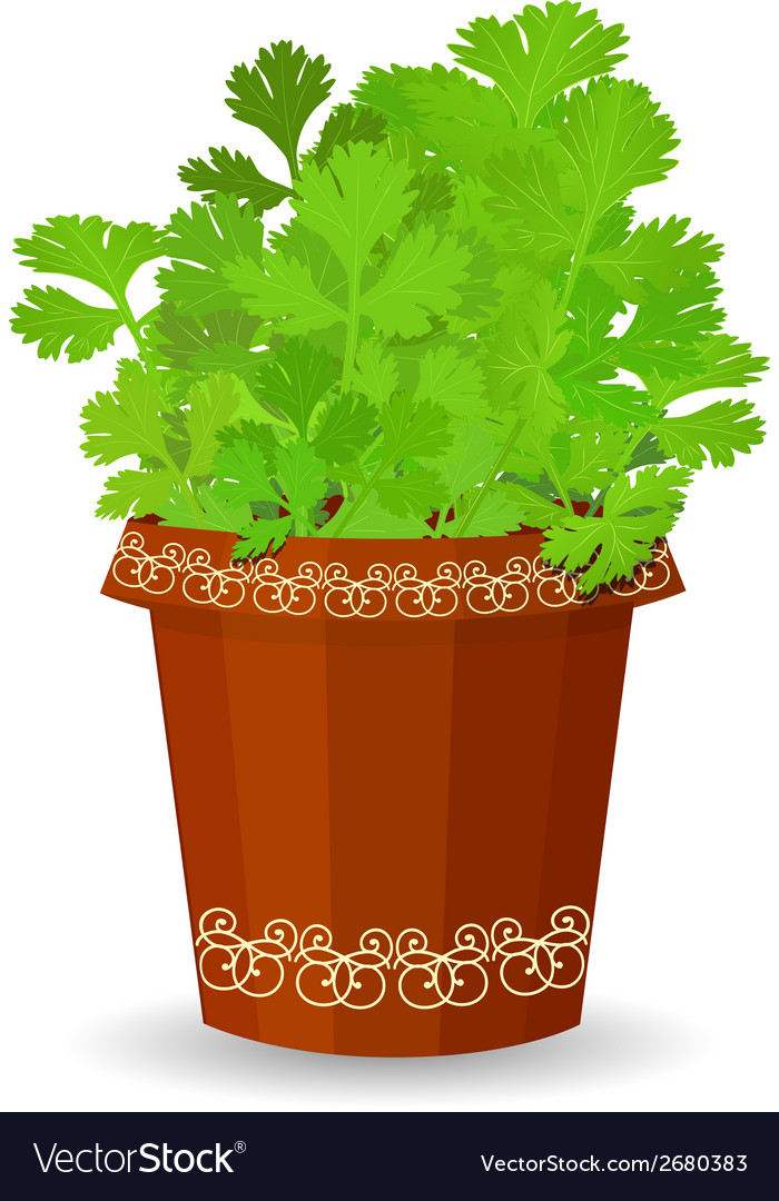 Parsley in a flower pot vector | Price: 1 Credit (USD $1)