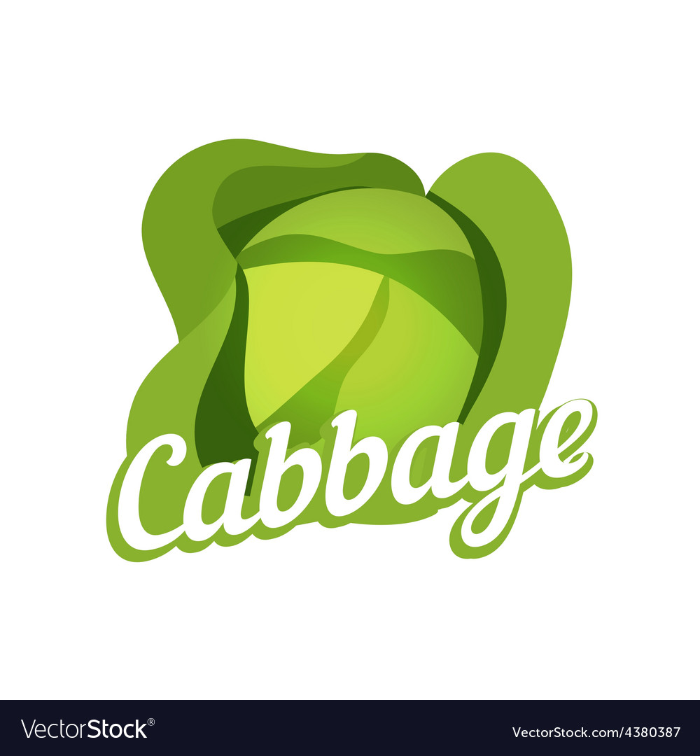 Ripe cabbage vector | Price: 1 Credit (USD $1)