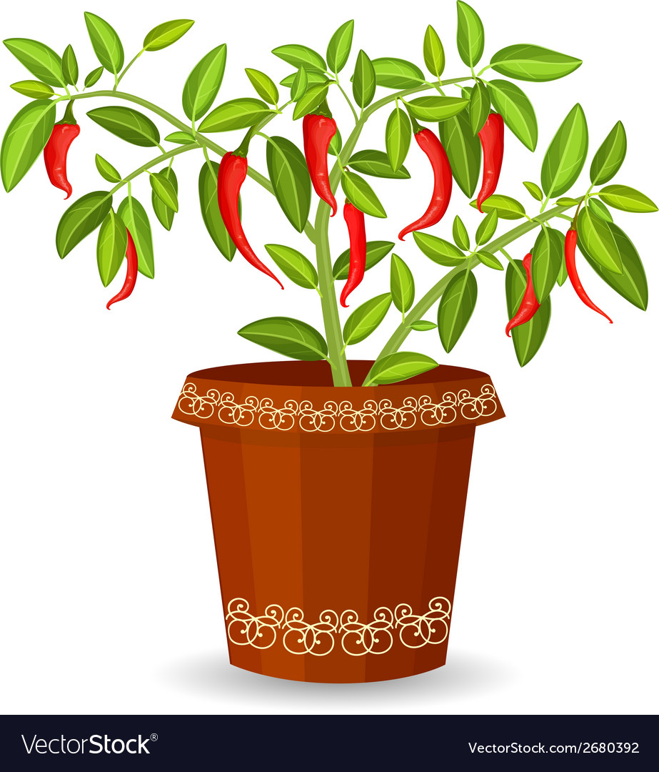 Hot pepper in a flower pot vector | Price: 1 Credit (USD $1)