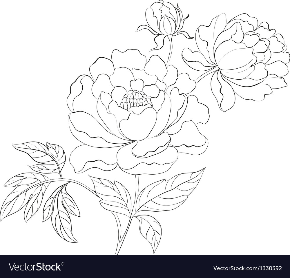 Peonies ink background vector | Price: 1 Credit (USD $1)