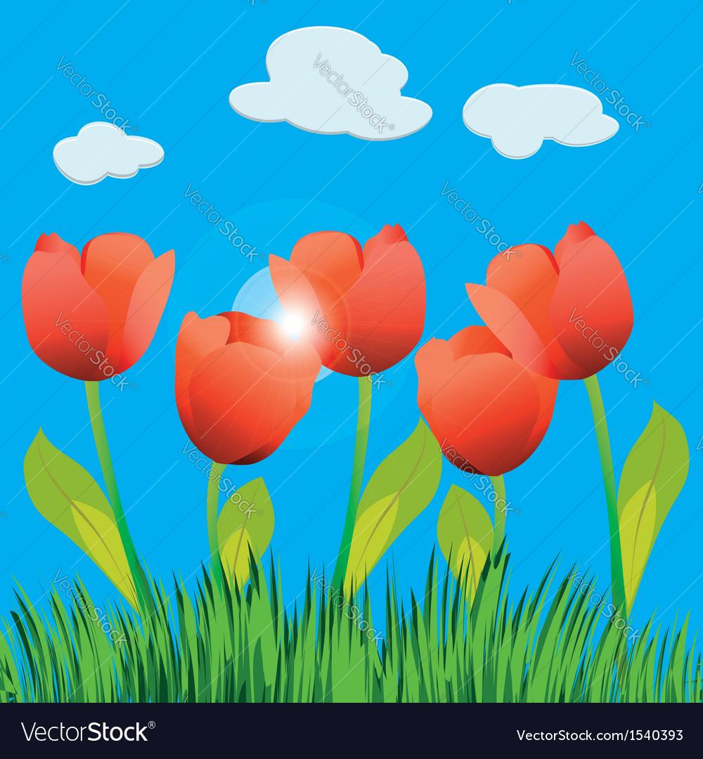 Tulip field vector | Price: 1 Credit (USD $1)