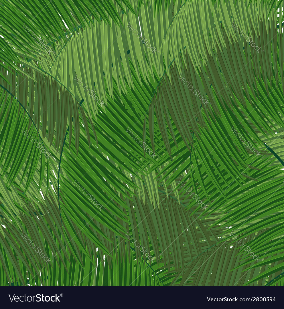 Dense tropical forest vector | Price: 1 Credit (USD $1)