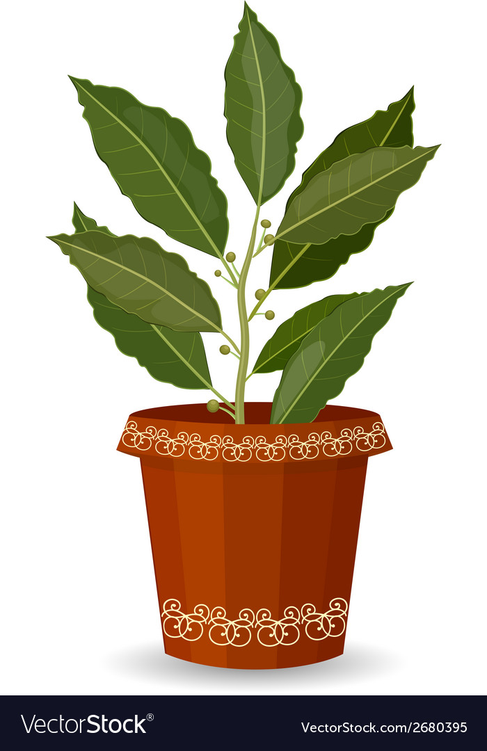Tree bay leaf in a flower pot vector | Price: 1 Credit (USD $1)