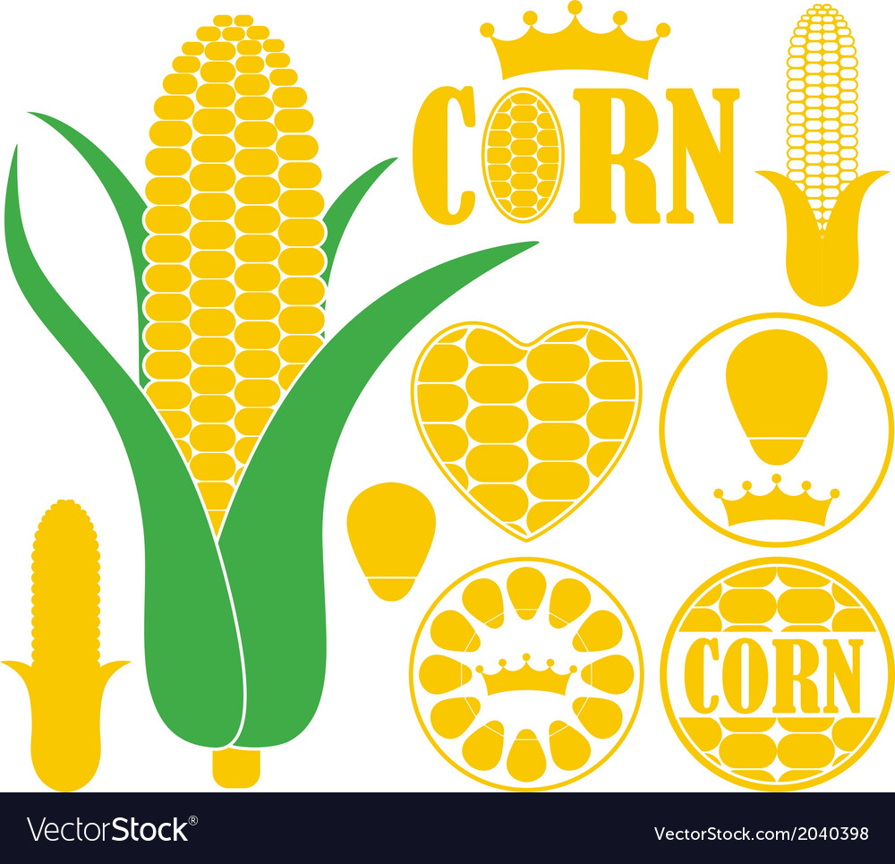Corn vector | Price: 1 Credit (USD $1)